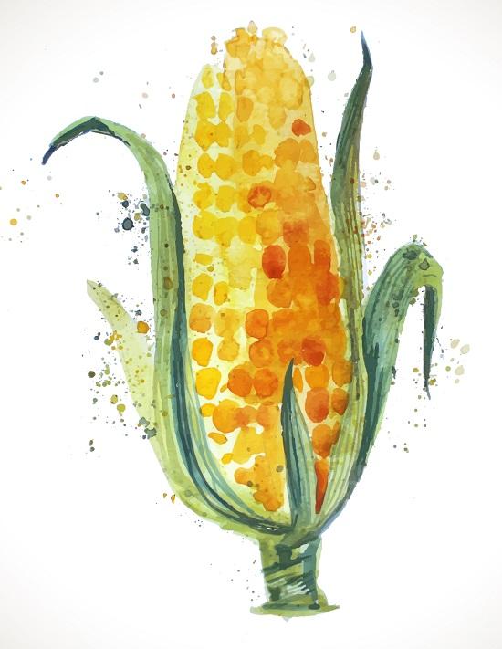 Benefícios do milho, Dicas e Receita