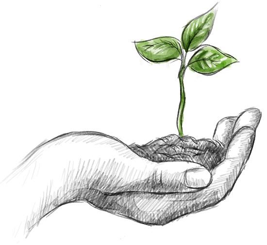 Plantas medicinais para emagrecer