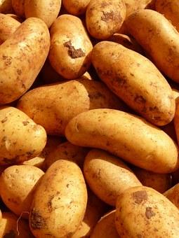 ➡ Batata yacon emagrece? Benefícios, Receitas 🍟 🍟